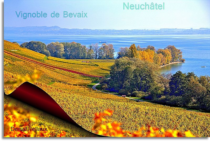 Bevaix, le vignoble et la Pointe-du-Grain